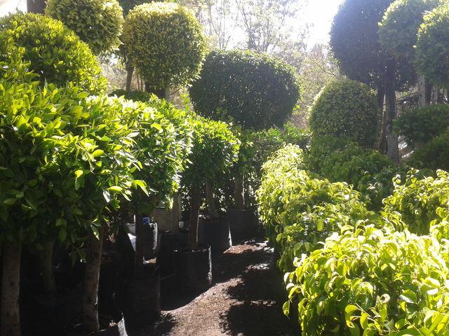 Sin nombre jardiner a m xico for Jardineria xochimilco